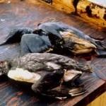 oil leak disaster